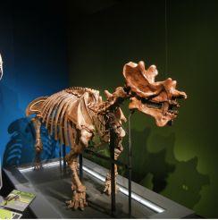 extreme-mammals